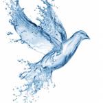 bird made up of water