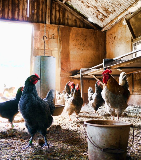 Treating Poultry Farm Water with Reverse Osmosis
